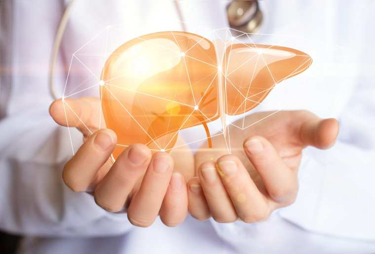 What are the Phases of Liver Detoxification? | El Paso, TX Chiropractor