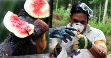 वैज्ञानिकों का बड़ा खुलासा, चमगादड़ से ही निकला था 'मौत का वायरस निपाह'