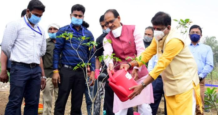 मुख्यमंत्री श्री चौहान ने लगाया चांदनी का पौधा