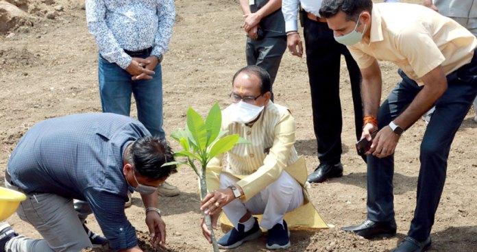 मुख्यमंत्री श्री चौहान ने रोपा चम्पा का पौधा
