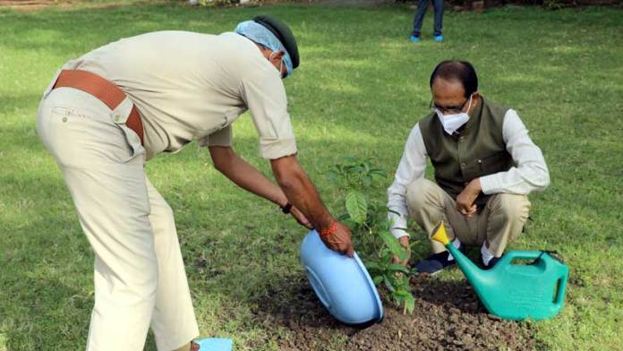 मुख्यमंत्री श्री चौहान ने सिकंद्रा का पौधा रोपा
