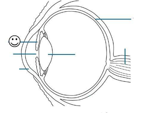 Blank Eye Diagram | Healthiack