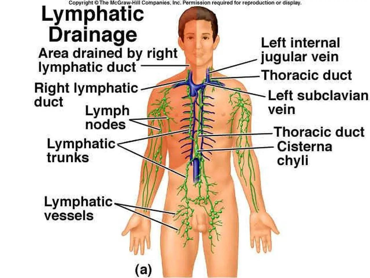 Body Quadrants Worksheet