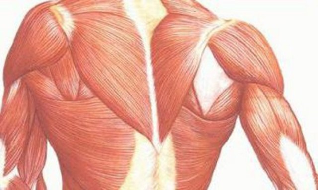 fibromialgia y miopatía