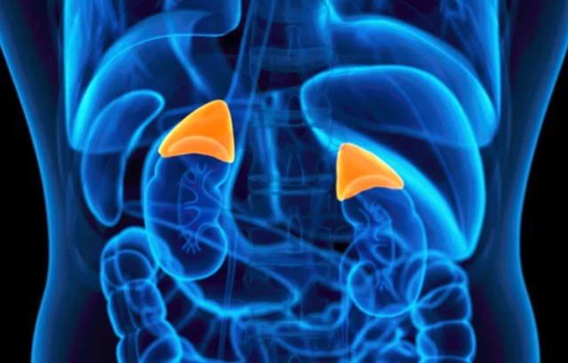 adrenal fatigue in fibromyalgia
