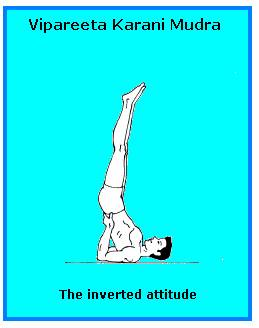 why inverted asanas is the best asana  healthier you