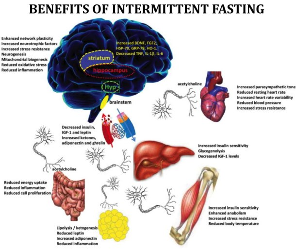 What to Do Before Extended Fasting - READ THIS BEFORE ...