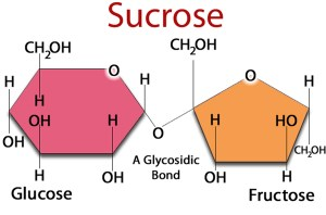 What is Fructose? Why is High Fructose Corn Syrup Bad?