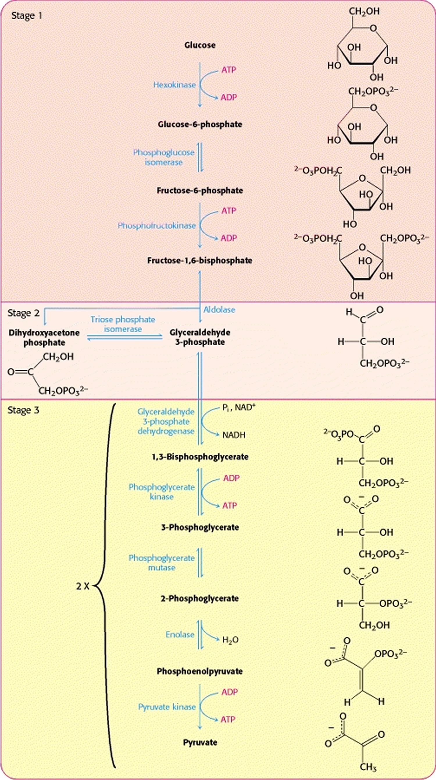 Citric Acid Citric Acid In Food Uses Is Citric Acid Bad