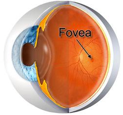Understanding The Eye: Anatomy | Health Life Media