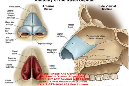 Interior nasal anatomy hd images wallpaper for downloads easy dog i inner parts of the nose nose inner diagram image inner parts of the inner parts of the nose nose inner diagram image inner parts of the nose tags ccuart Image collections