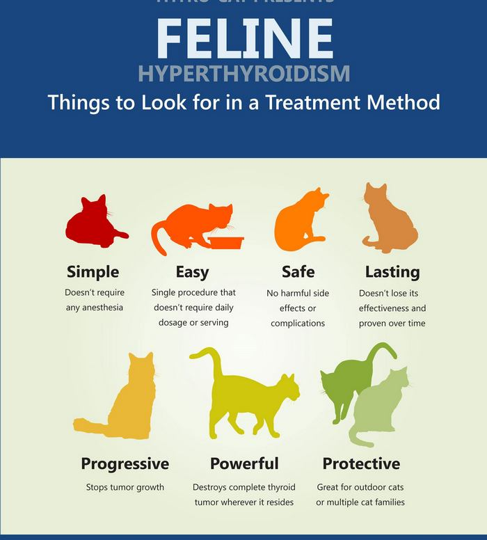 feline hyperthyroidism is hypothyroidism in cats which may cause weight loss