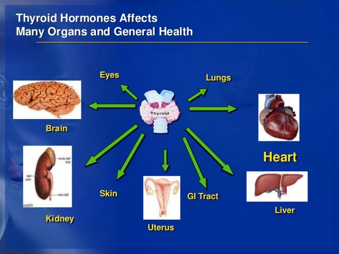 importance of thyroid gland and thyroid function test