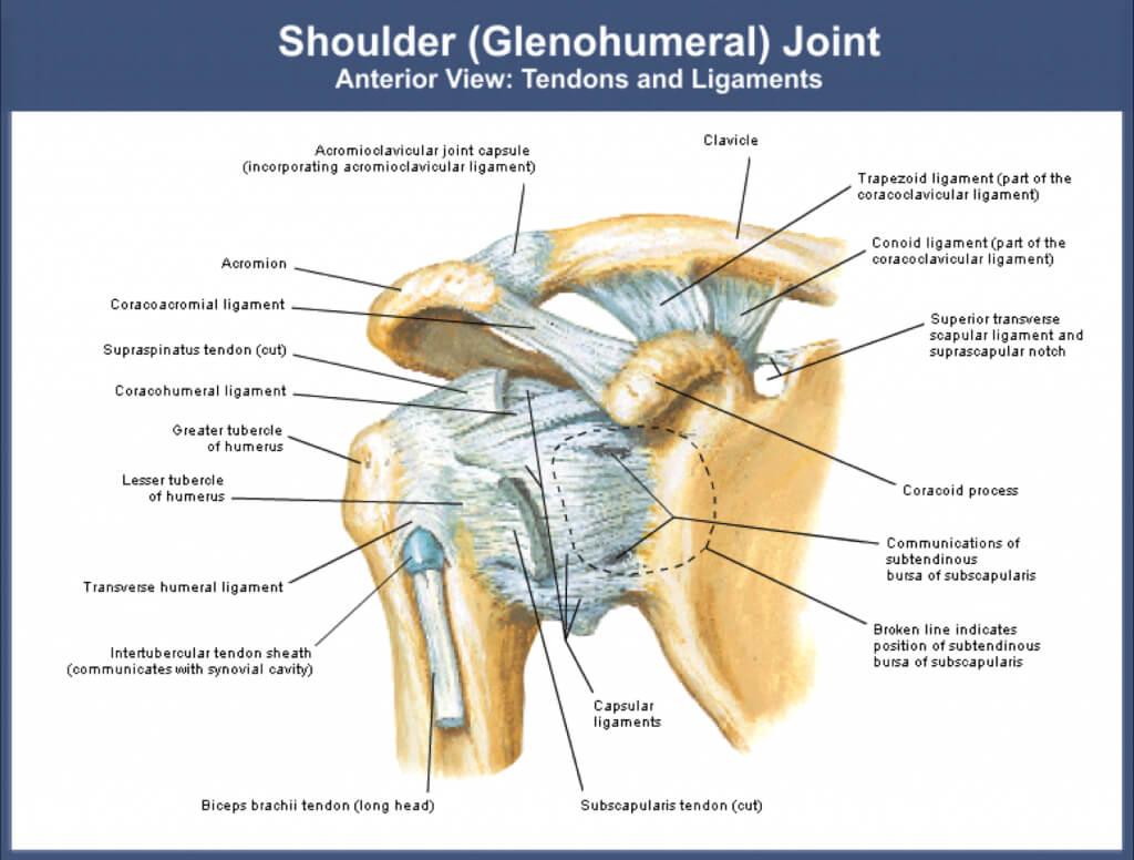 shoulder rehabilitation, shoulder injuries, dislocation ...