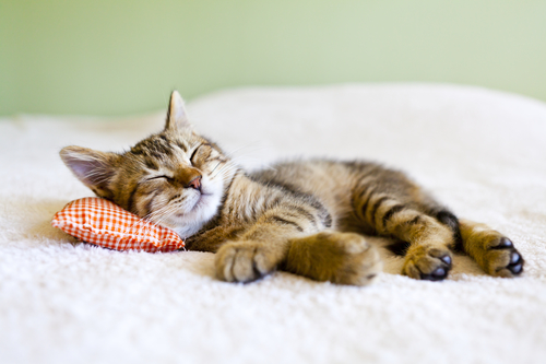 12 Natural Things To Help You Sleep Better Tonight