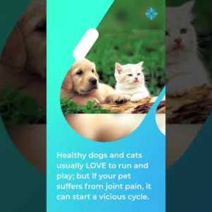 Pet Bounce A Complete Multivitamin For Your Cat And Dog #shorts