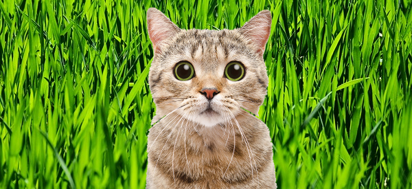 AI Predicts Kidney Disease in Cats