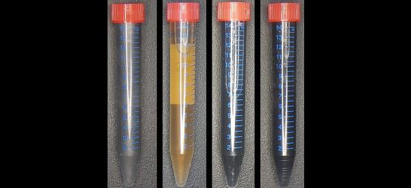 Using Bacteria to Create Graphene