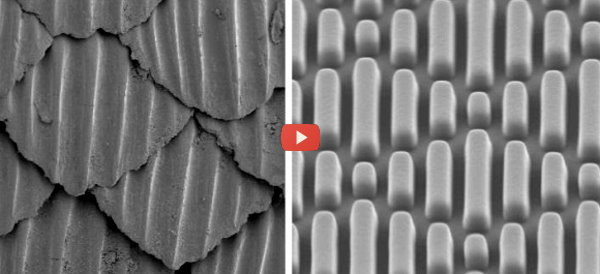 Sharkskin Inspires Antimicrobial Material [video]