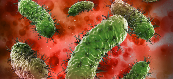 Bacteria Can Power Implant Devices