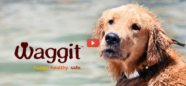 Pet Health Wearable Ticks Multiple Boxes [video]