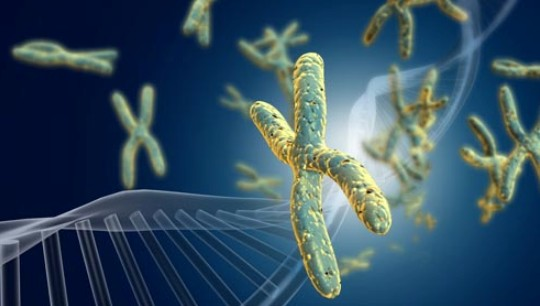 Secrets for a Longer Life, DNA Structure