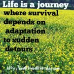 Life is a journey #ClickandBlogAStory