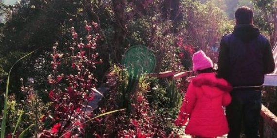Blossoms Eco tourism :Chota Mangwa