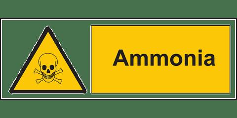 タンパク質 アンモニア