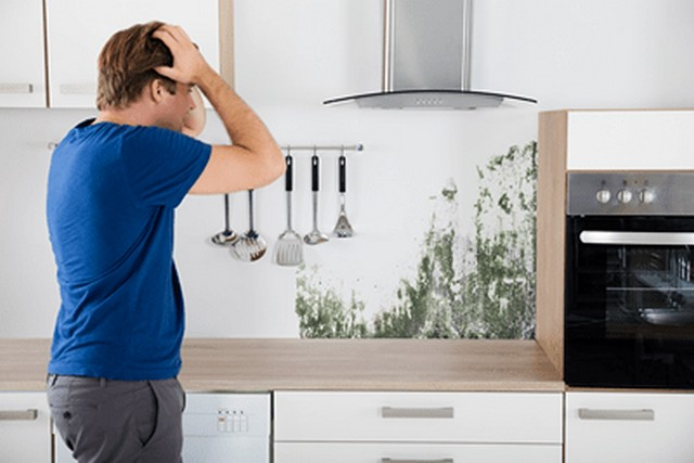 Top 10 Concerns Caused By Mold!: Considering that some molds, like Stachybotrys chartarum and Aspergillus, produce mycotoxins that cause sickness, the purpose of this article is to list and explain the top 10 concerns caused by mold. Pay particular attention to the health concerns numbers 2, 4, 7, and 10.