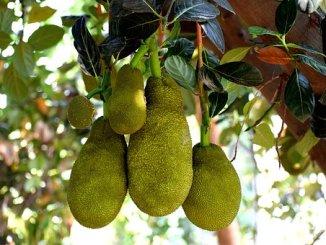 fruit-3498540__340