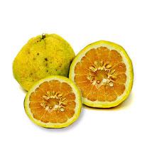 Ugli_Fruit