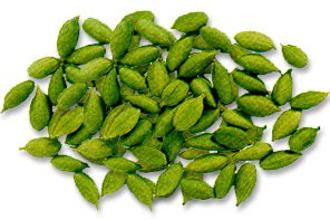 Cardamom Herb