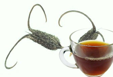 Devil's claw Tea