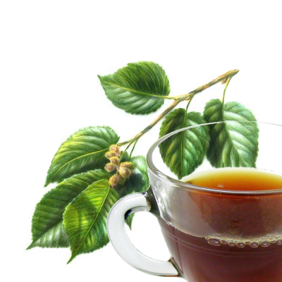 Slippery Elm Herb Tea