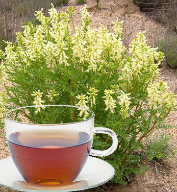 Astragalus Herb Tea