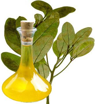 Ravensara Oil