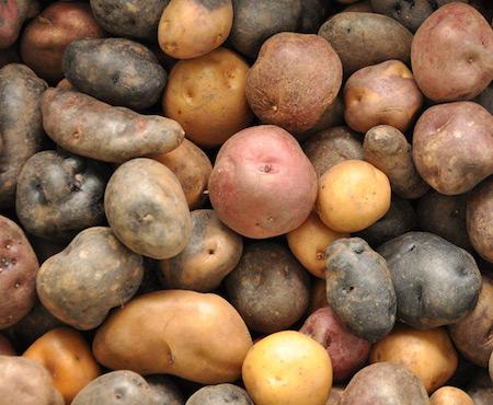 African Wild Potato