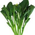 Choy Sum Vegetable
