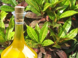 Croton Herb Oil