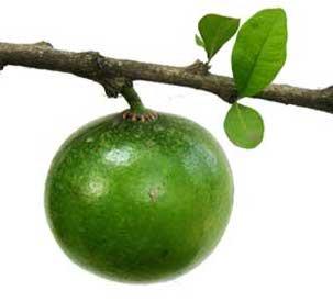Dalanghita Fruit