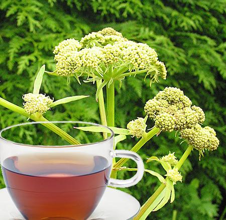 Lovage Tea
