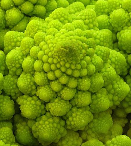 Romanesco Vegetable