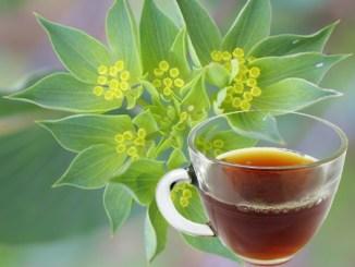 Bupleurum Tea