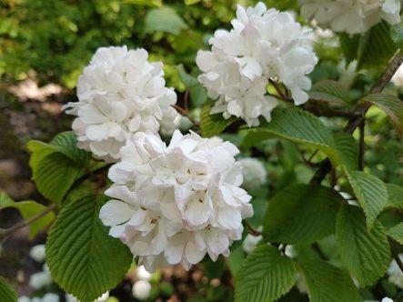 flowers-2350363__480