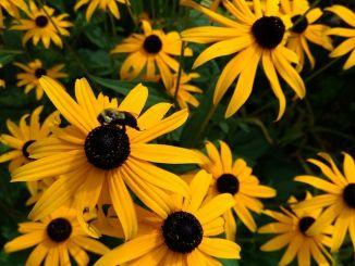 flowers-2743817__480