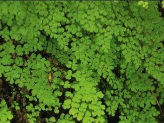 bush121