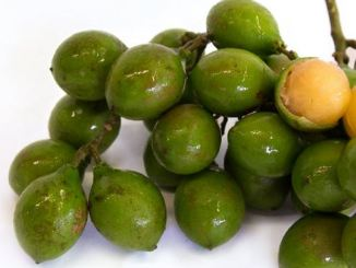 Spanish-Lime-genip