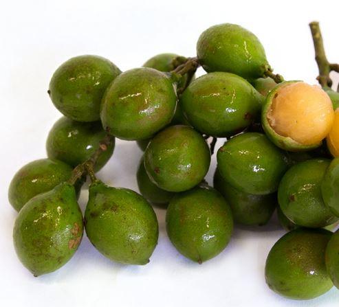 Spanish-Lime-genip