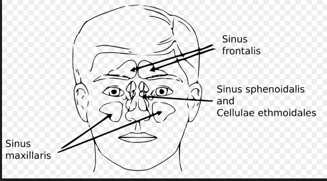Homeopathy Treatment of Sinus